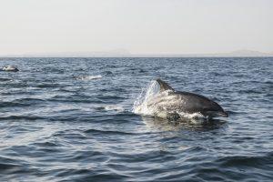 Delfino in Oman accanto alla nostra barchetta mentre facciamo colazione nel mezzo della baia