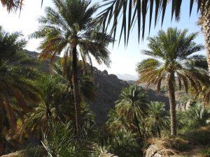 La radura di Misfat in Oman