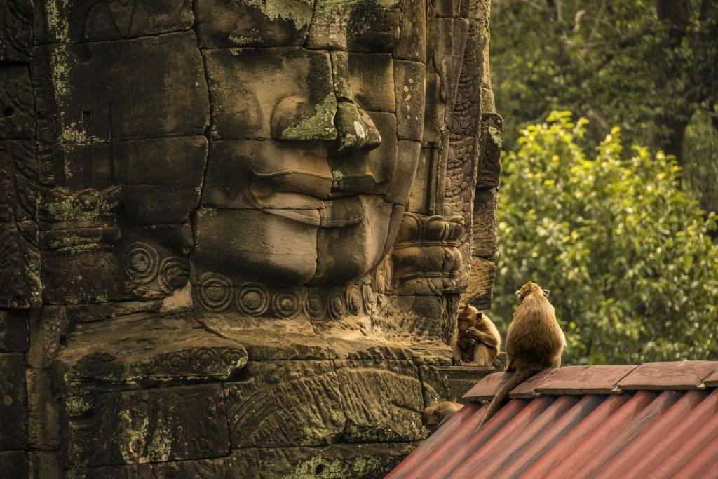 Scimmie nel tempio Bayon