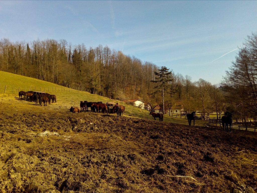 I cavalli Bardigiani del maneggio Le Carovane a Compiano