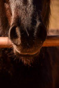 Muso del cavallo Agriturismo Carovane