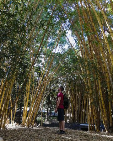 Brisbane Botanic Gardens Enrico fra i Bamboo