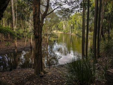 Brisbane Botanic Gardens Scorcio Laguna