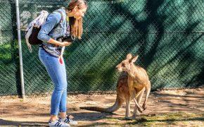 Uno dei miei primi incontri con un canguro in Australia